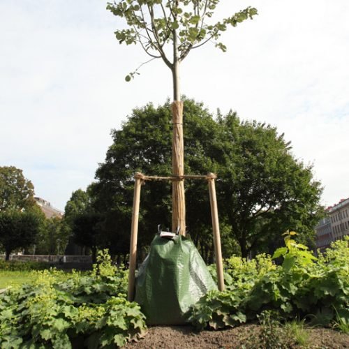 Träd-A-500x500