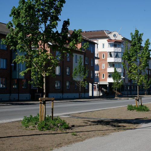 trädjord-mineral-500x500